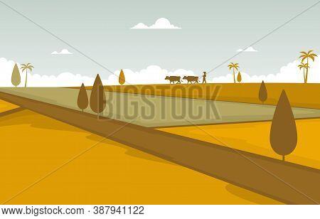 Asian Rice Field Golden Paddy Plantation Ready To Harvest Illustration