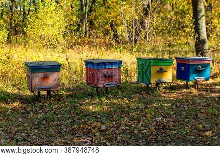 Old Colorful Wooden Beehives In Forest Glade At Autumn