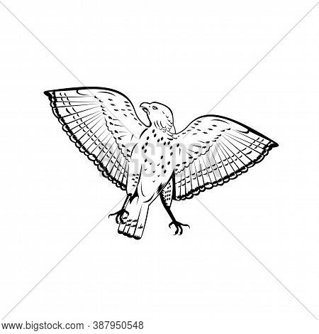 Retro Woodcut Style Illustration Of A Broad-winged Hawk, A Small Hawk Of The Genus Buteo, Flying Vie