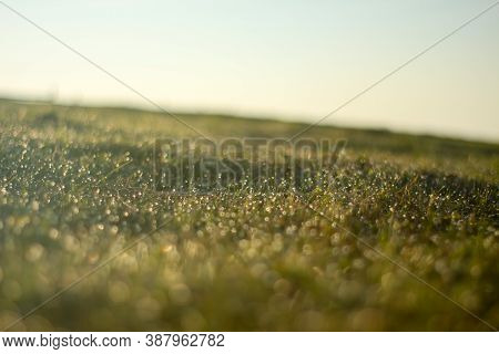 Close Up Of Dewdrops On The Grass In The Morning With Clear Sky And Sun