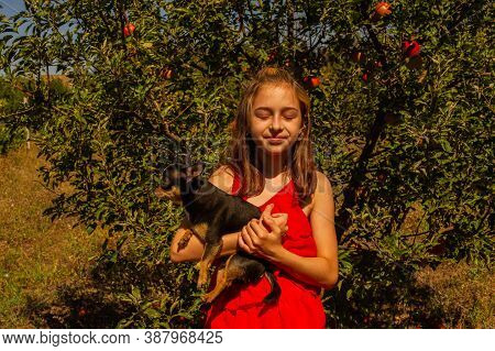 Little Chihuahua Sits Quietly On The Arms Of His Lovely Owners Beautiful Teen Girl And Chihuahua. Ch