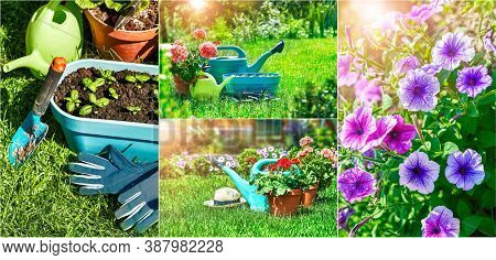 Collage mix set of Home gardening and flower-growing still-life of flower in pot with watering can garden tools on green grass.