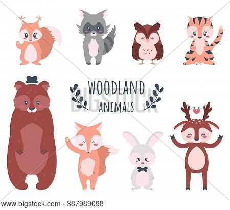 Cute Forest Animals. Funny Cartoon Woodland Characters, Bear And Rabbit, Fox Raccoon Cat, Bunny And