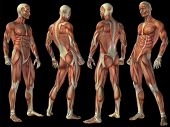High resolution concept or conceptual human or man 3D anatomy body with muscle isolated on black background as metaphor to medicine,sport,male ,muscular,medical,health,biology or fitness group or set poster