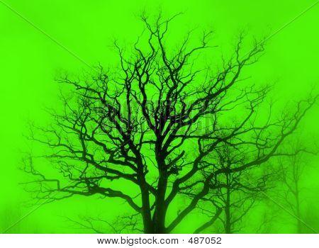Gloomy Oak, Green Mist