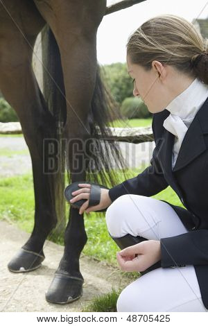 Side view of a woman grooming horse's leg outdoors poster