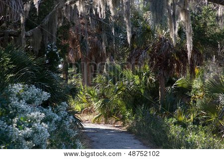 path with overhanging trees