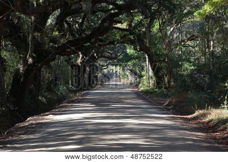 Road with Oak Canopy