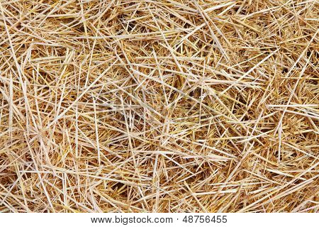 The wheat straw food for cattle. Organic background.