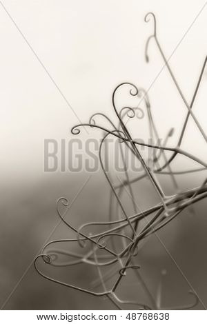 Pea Tendril Abstract