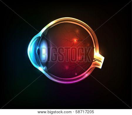 Beautiful Colorful Human Eye
