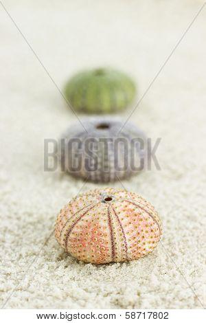 Sea Urchins On The Beach