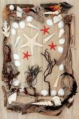 Sea shell, driftwood and seaweed abstract design over old oak background. poster