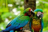 Colorful Harlequin Macaw aviary sitting on the log poster
