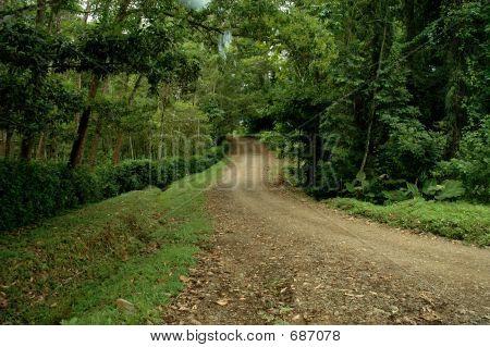 Dirt Road Thru Forest