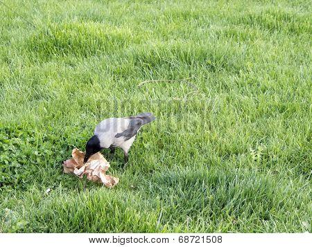 Eating Birds