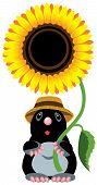 cartoon mole holding a sunflower, isolated image for little kids poster