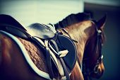 Saddle with stirrups on a back of a horse poster