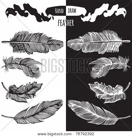 Hands Drawn Bird Feather Vector