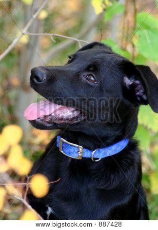 Puppy Shots 11