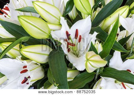 Bush Of Purple Lily Flowers (lilium)