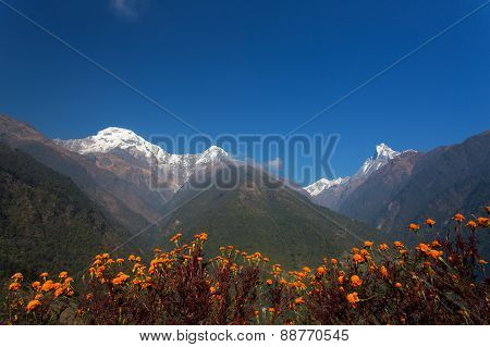 Machhapuchchhre mountain - Fish Tail in English is a mountain in the Annapurna Himalya Nepal poster