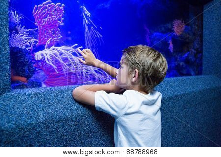 Young man touching an algae tank at the aquarium
