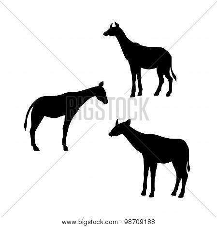 Okapi vector silhouettes.