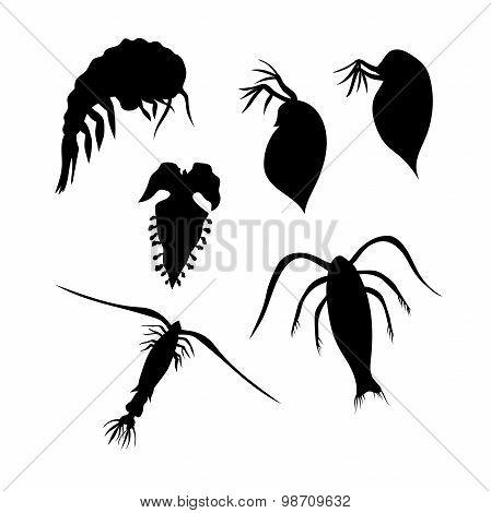 Plankton vector silhouettes.