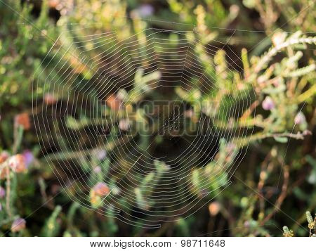 Closeup Of Spider Web With Heathland Backdrop