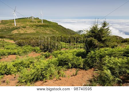 Landscape At Highlands Paul Da Serra, Madeira Island