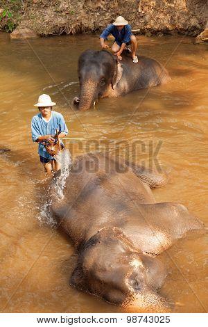 Elephants In Maesa Elephant Camp