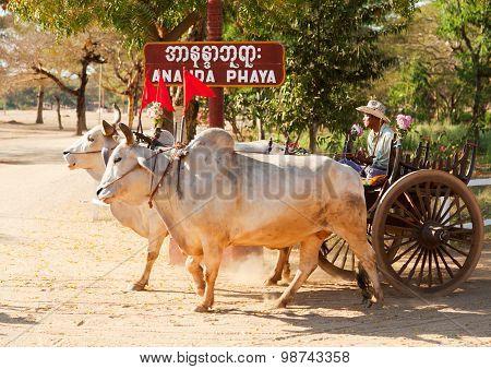 Burmese Bull Cart, Bagan, Myanmar