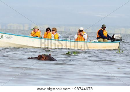 Hippopotamus, Lake Naivasha