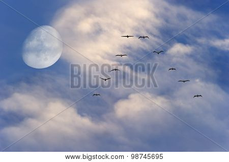 Moon Clouds Birds Flying