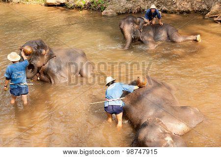 Elephants In Maesa Elephant Camp, Thailand