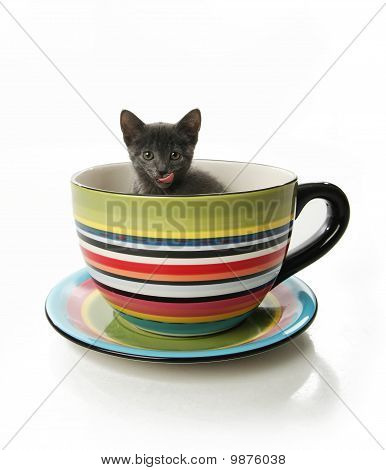 Kitty in a tea cup