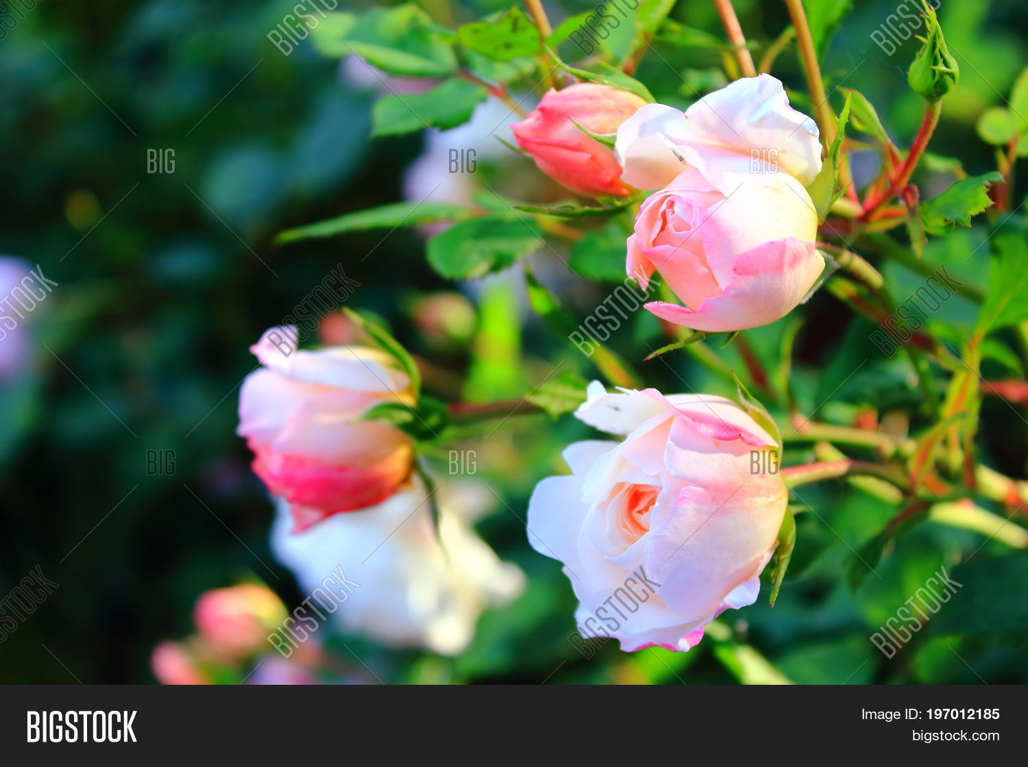 Flowers 8 Marh Image Photo Free Trial Bigstock