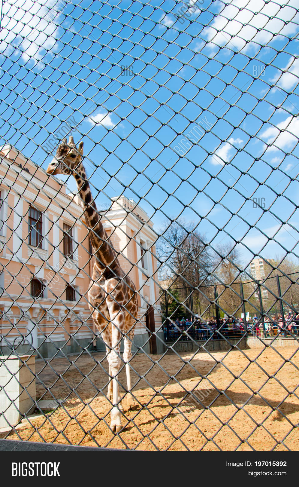 Zoos of Russia: a selection of sites
