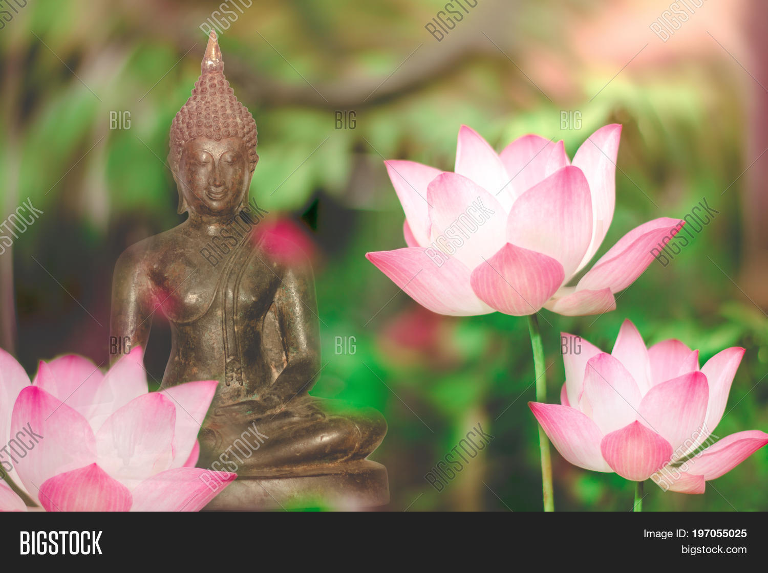 Buddha statue lotus image photo free trial bigstock buddha statue and lotus flower foreground soft light visakha puja day buddhist holiday izmirmasajfo