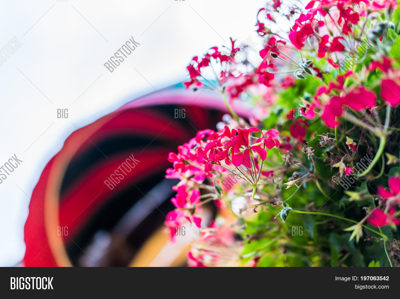Macro Closeup Colorful Image Photo Free Trial Bigstock