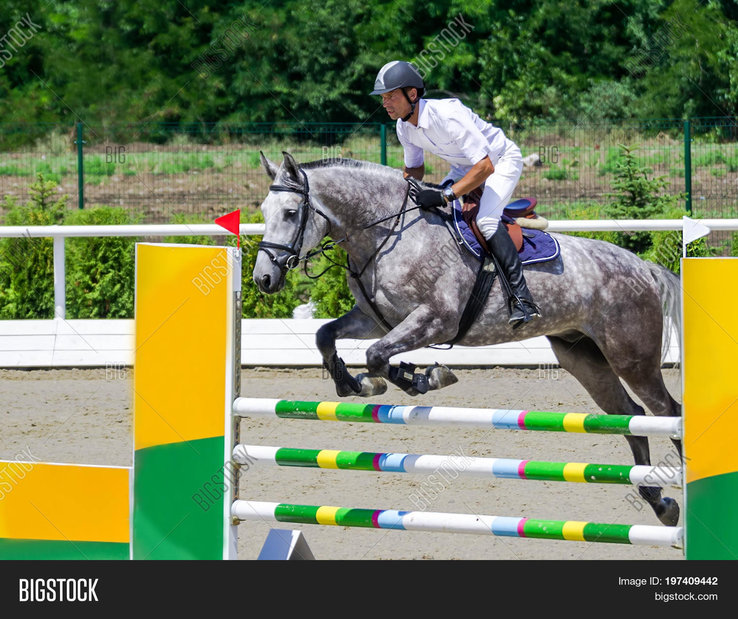 Rider On Gray Horse Image Photo Free Trial Bigstock