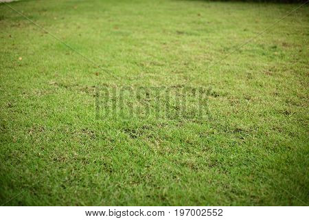 Green Grass Turf