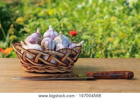 Ripe Garlic In A Wicker Basket And Stainless Steel Knife On Wooden Board With Natural Green Backgrou