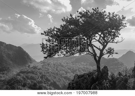 Black and White image of Alone small tree on the rock of hill or mountain with blue sky and cloud on the background.