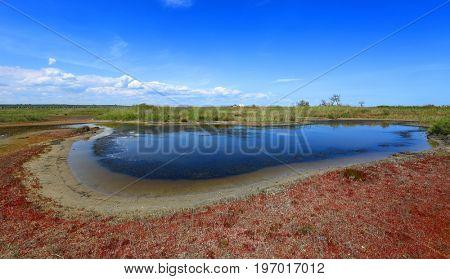 summer scene on small seashore lake