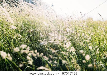 Picture of beautiful grassland in countryside at sunlight