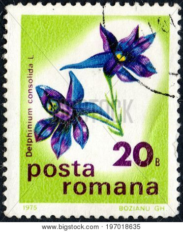 UKRAINE - CIRCA 2017: A postage stamp printed in Romania shows flower Larkspur Delphinium consolida from series Flowers circa 1975