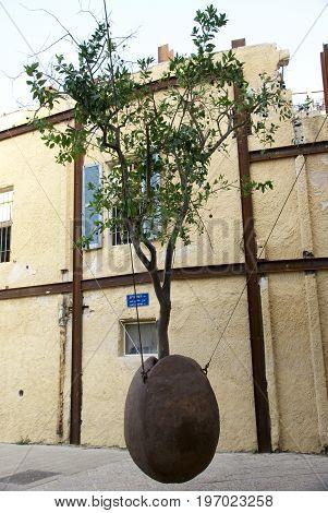 Orange tree. Tel Aviv. The old city of Jaffa. Israel.