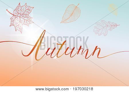 Autumn brush hand written title with colorful bright leaves and sun flash. Vector illustration in eps8 format.